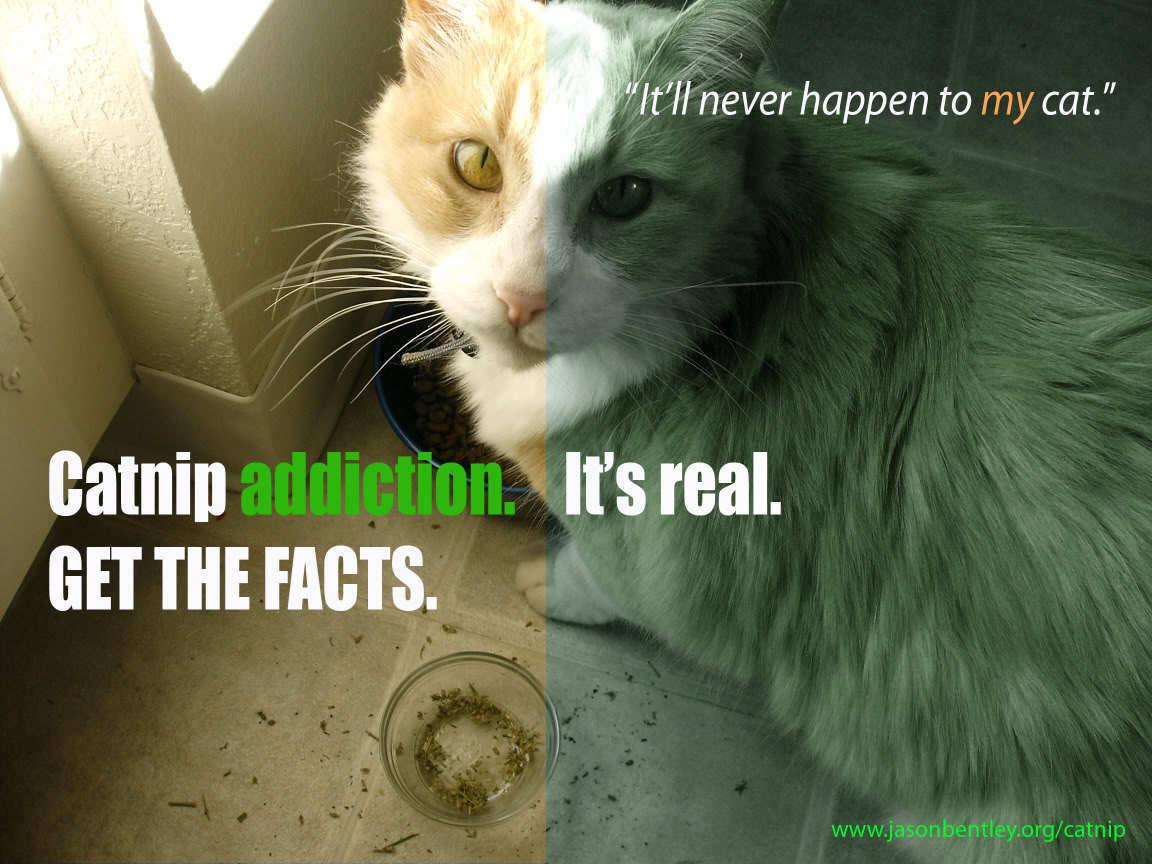Catnip spray for cats