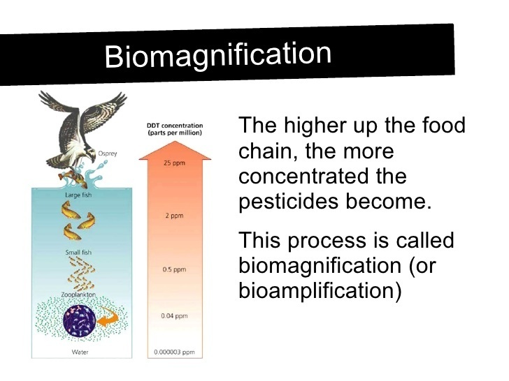 lab on biomagnification Video computer games, virtual labs and activities for learning and reviewing biology content also, learn about eutrophication, biomagnification, dissolved oxygen, ph, and the effects of pesticides.